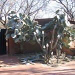 cactus1b