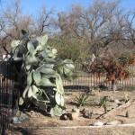 cactus2b